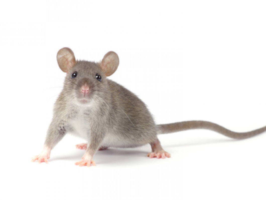 Can you prevent mice infestations?